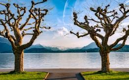Zug Lake Paint